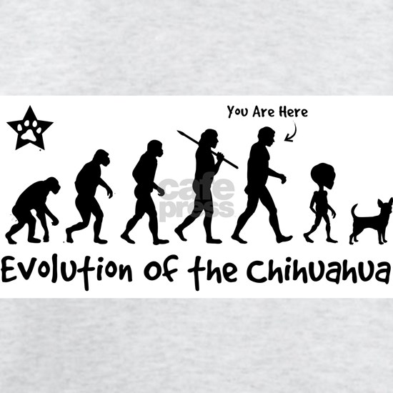 evolution_chi_ringer