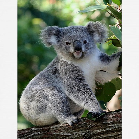 Cute cuddly Australian koala (vertical) in gumtree