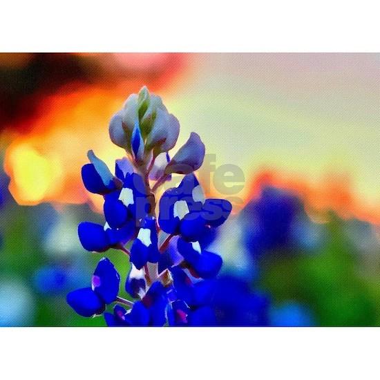 Bluebonnet at Sunset