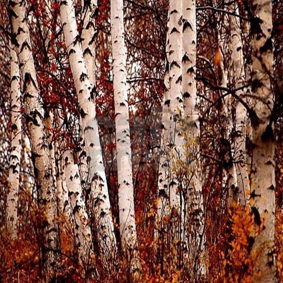 fall landscape birch tree