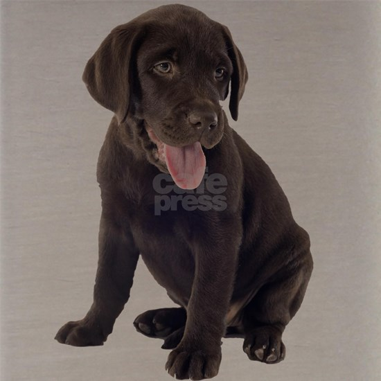 Chocolate, Lab, puppy