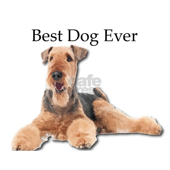 Airedale Terrier is Best Dog Ever