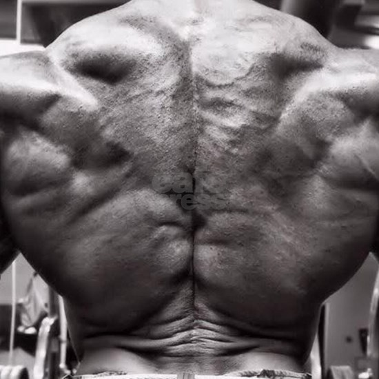 BODYBUILDING BACK
