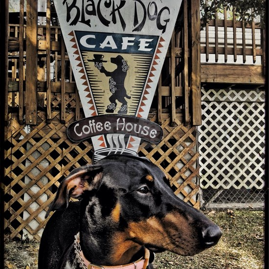 Black Dog Cafe II