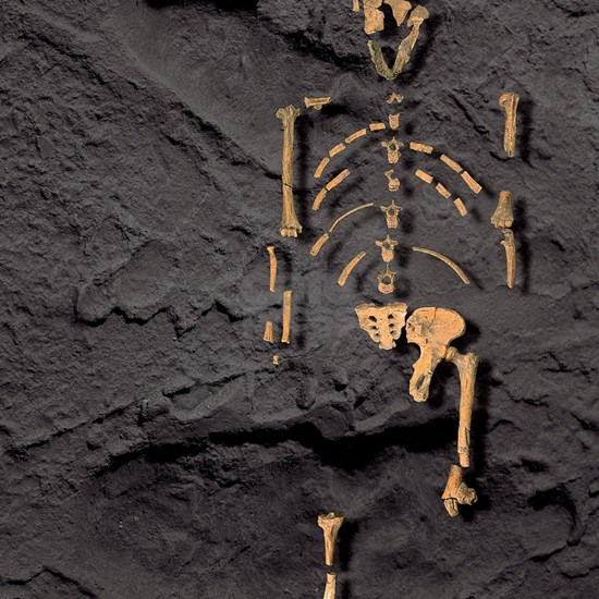 Footprints and skeleton of Lucy