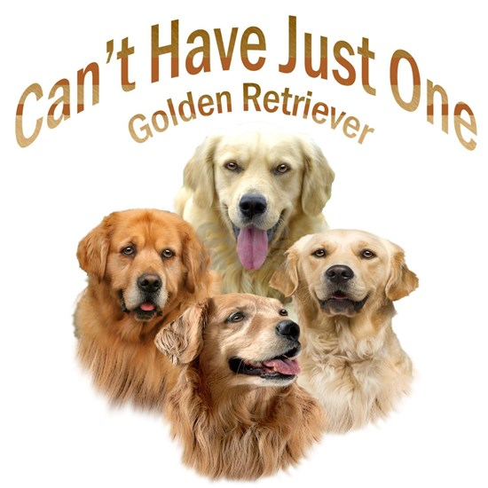 Cant Have Just One Golden Retriever