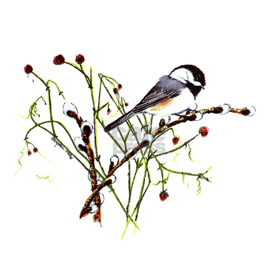 Pussywillow Chickadee