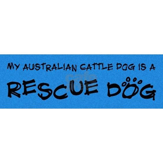 australiancattle_rescuedog