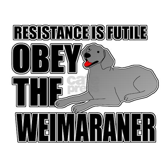 Obey the Weimaraner
