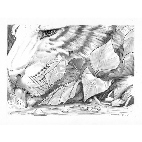 Tiger Sketch Original