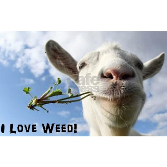 Weed Goat