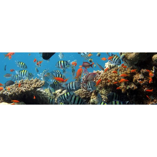 Exotic Fishes and Underwater Plants