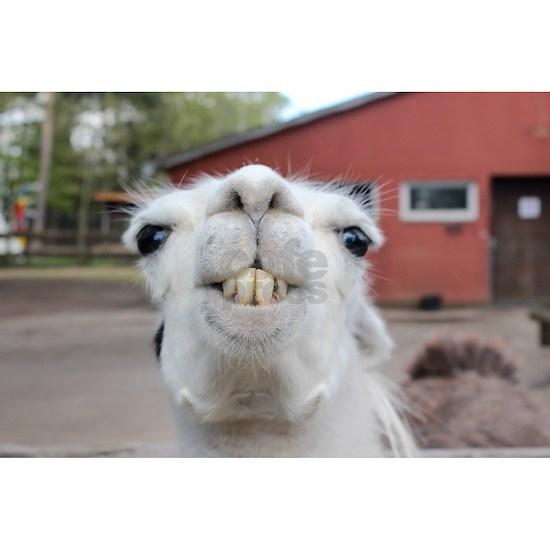 Funny Alpaca Llama