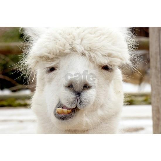 Funny Alpaca Smile