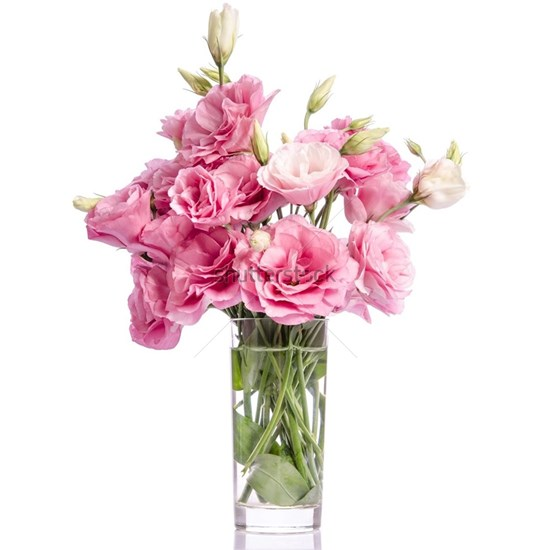 bunch of  pink eustoma flowers in glass vase isola