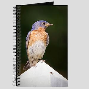 Male Bluebird Journal