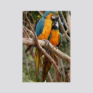 Blue And Gold Macaw Rectangle Magnet