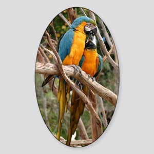 Blue And Gold Macaw Sticker (Oval)