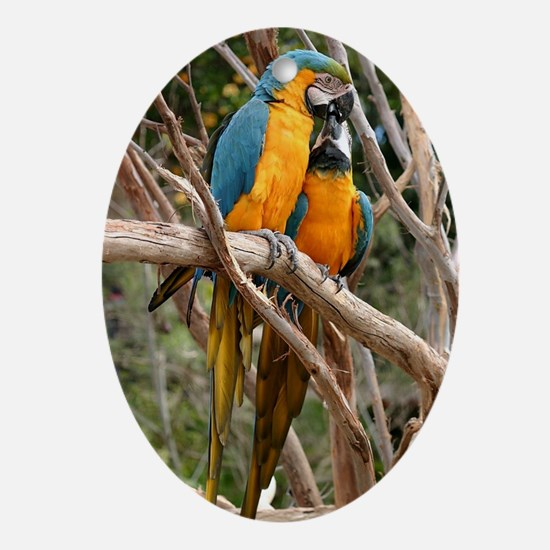 Blue And Gold Macaw Oval Ornament