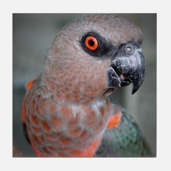Redbellied Parrot Tile Coaster