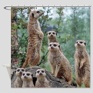 Meerkat010 Shower Curtain