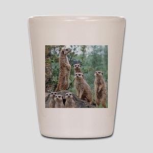 Meerkat010 Shot Glass