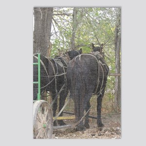 Percheron Team Postcards (Package of 8)