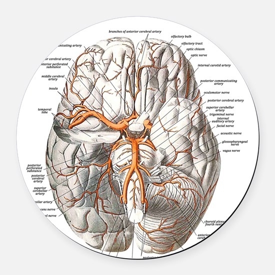 Brain and Blood Vessels Round Car Magnet