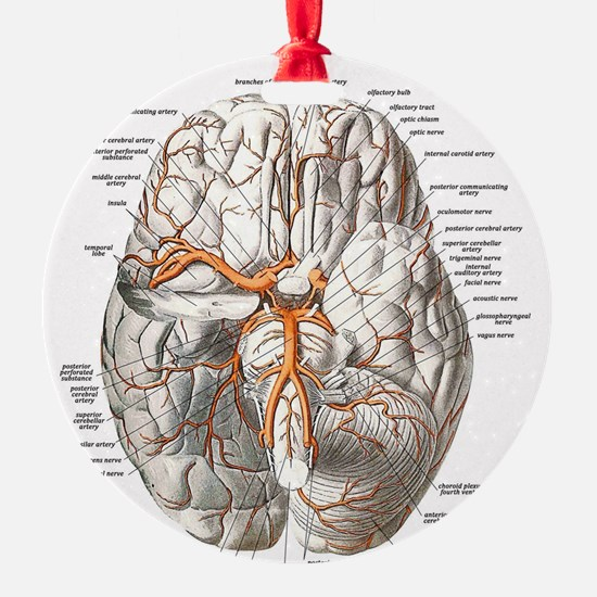Brain and Blood Vessels Ornament