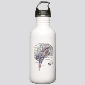 Pathways of the Brain Stainless Water Bottle 1.0L