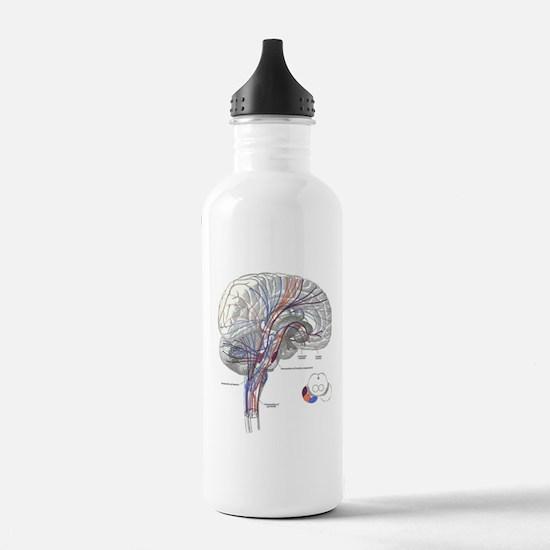 Pathways of the Brain Sports Water Bottle