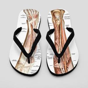 Anatomy of the Feet Flip Flops