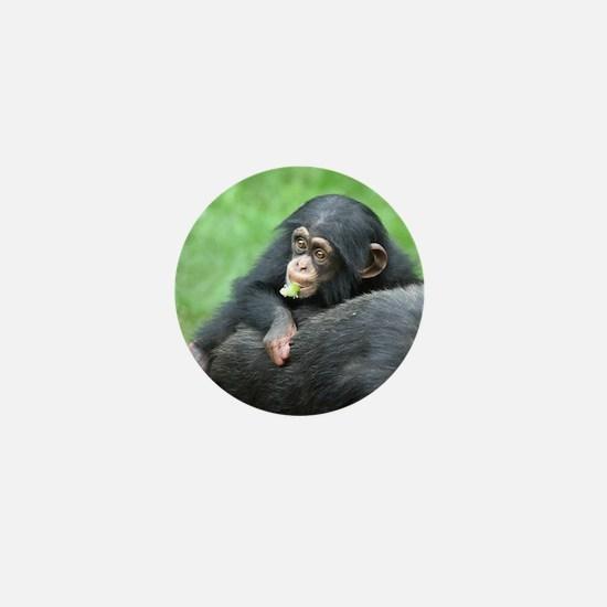Chimpanzee005 Mini Button