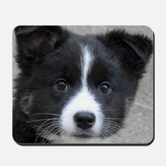IcelandicSheepdog007 Mousepad