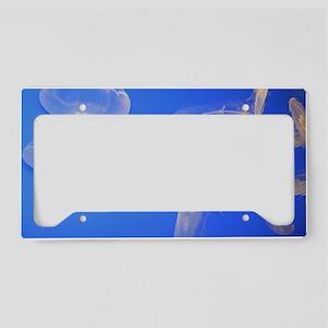 Moon Jellyfish  License Plate Holder
