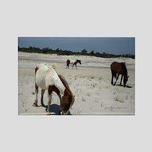 Assateague ponies Magnets