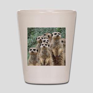 Meerkat012 Shot Glass