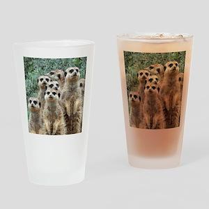 Meerkat012 Drinking Glass