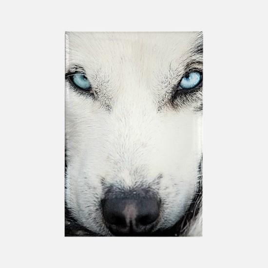 Blue Eyed Husky Rectangle Magnet