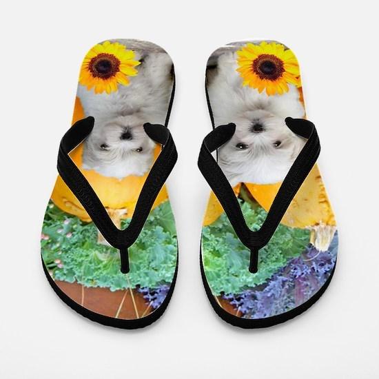 Thanksgiving Maltese puppies Flip Flops