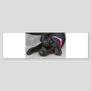 Wet Lilly 4 Bumper Sticker