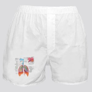 Respiratory system complete Boxer Shorts