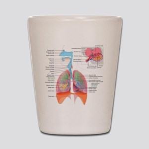 Respiratory system complete Shot Glass
