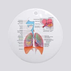 Respiratory system complete Ornament (Round)