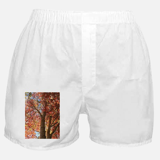 Ruby Leaves Boxer Shorts