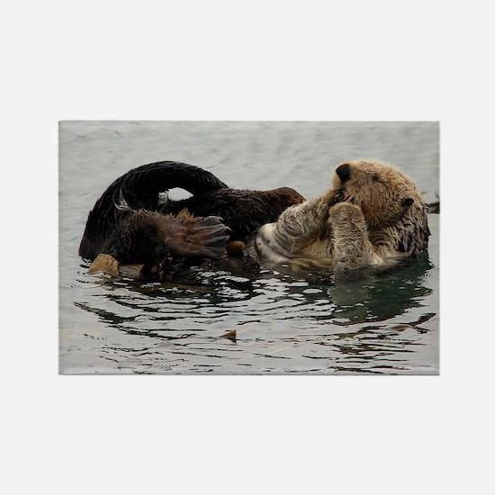 California Sea Otter Rectangle Magnet
