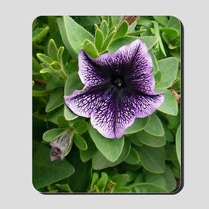 Scottish Garden Mousepad