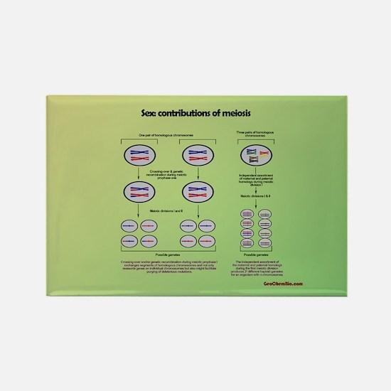 Genetics of meiosis Magnets