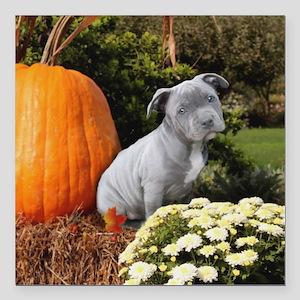 "Halloween pitbull puppy Square Car Magnet 3"" x 3"""