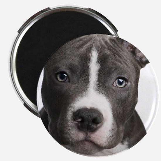 Pitbull Lovers Magnet
